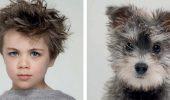 собаки и люди