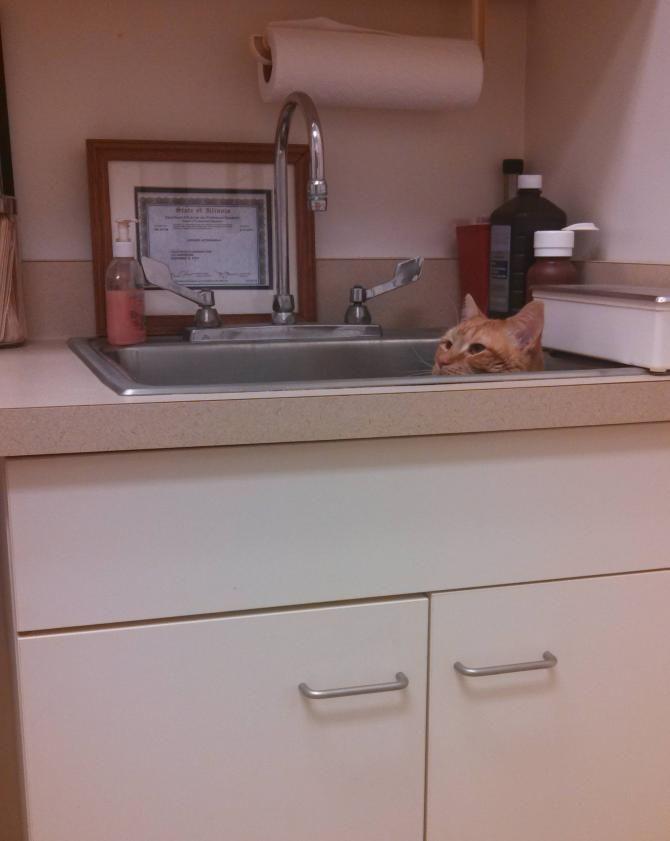 кіт у ветеринара