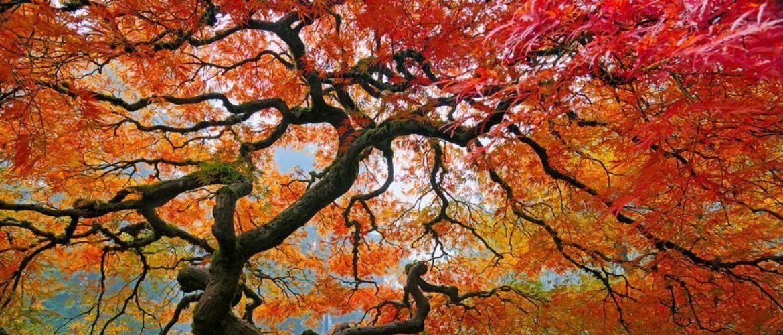 15 приголомшливих дерев. (Особливо дерево №6)
