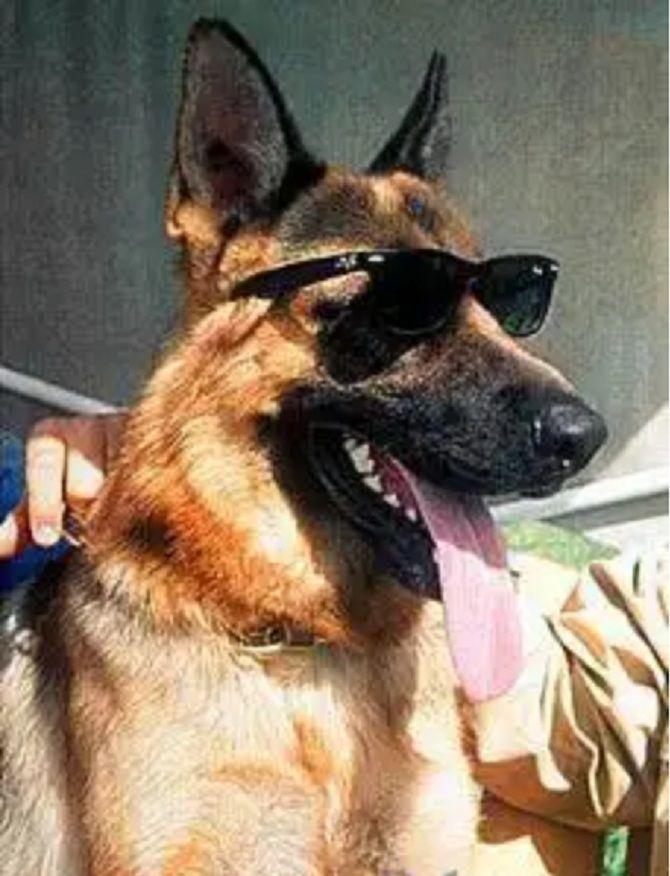 собака гюнтер