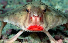 рыба ласточка