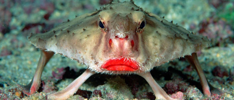 ТОП-7 самых необычных животных нашей планеты