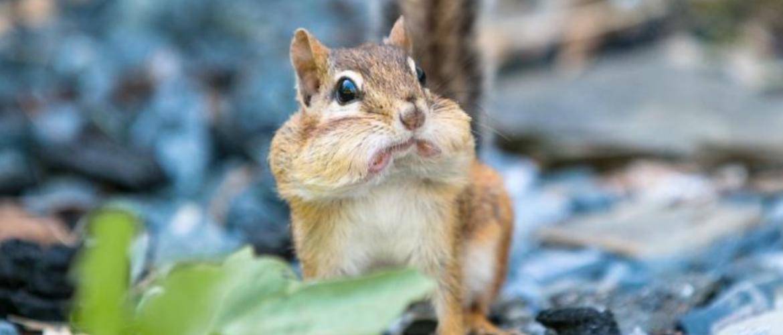 Тварини, які дійсно вміють дивуватися: фотоприколи