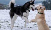 20 веселих відео про собак, які зроблять ваш день