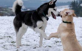 20 веселых видео о собаках, которые сделают ваш день