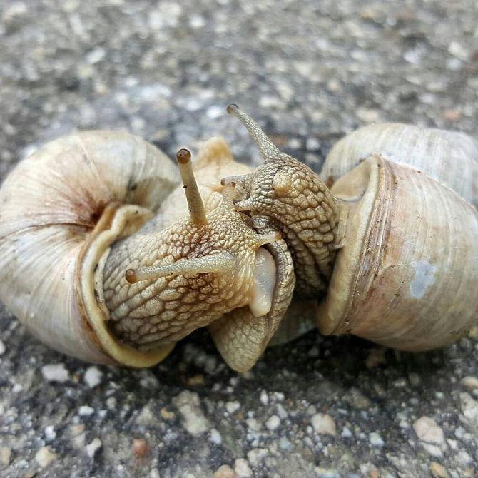 равлики