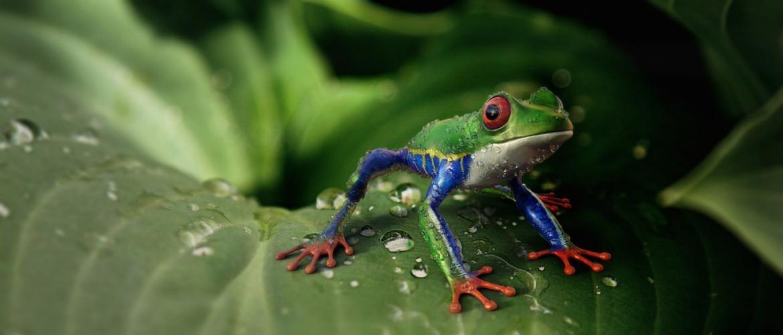 20 дивовижних і маловідомих фактів про тварин