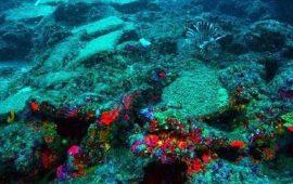 В Турции нашли корабль, затонувший 3,6 тысячи лет назад