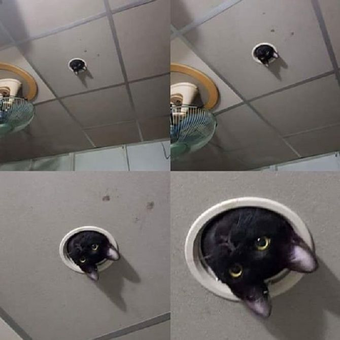 кот в стиралке