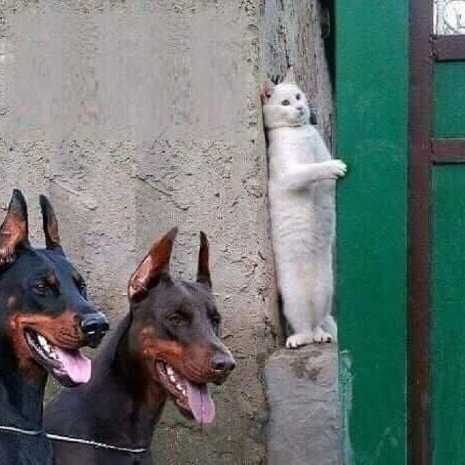 кот и собаки
