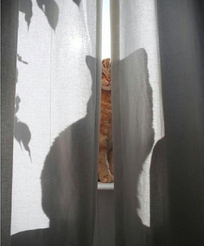 кот за занавеской