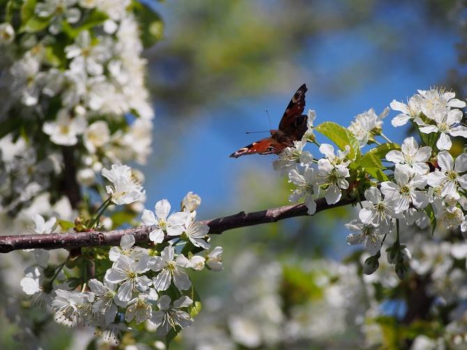 день труда и весны