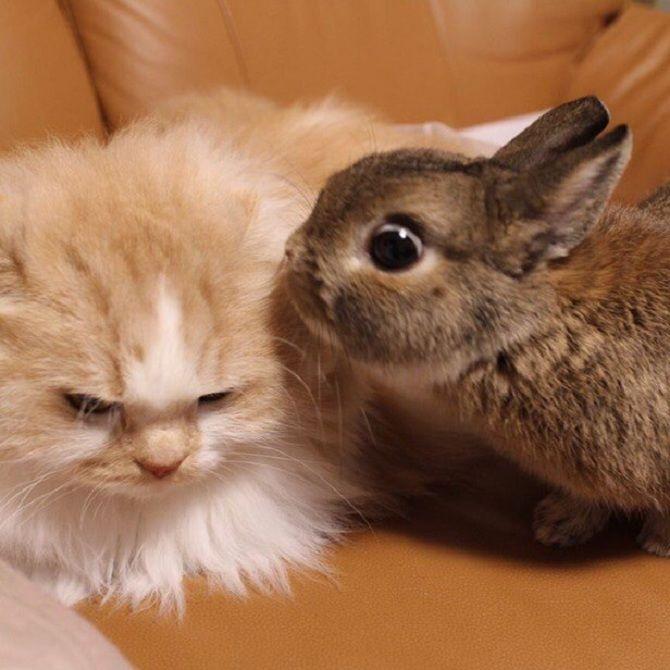 кішка и кролик