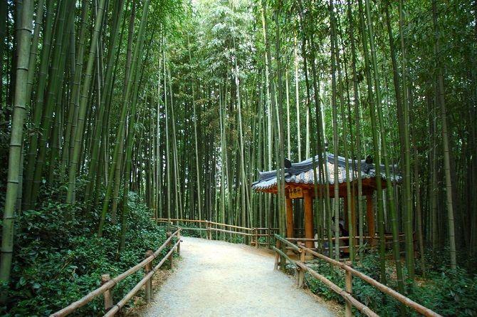 Бамбукова Стежка, Японія