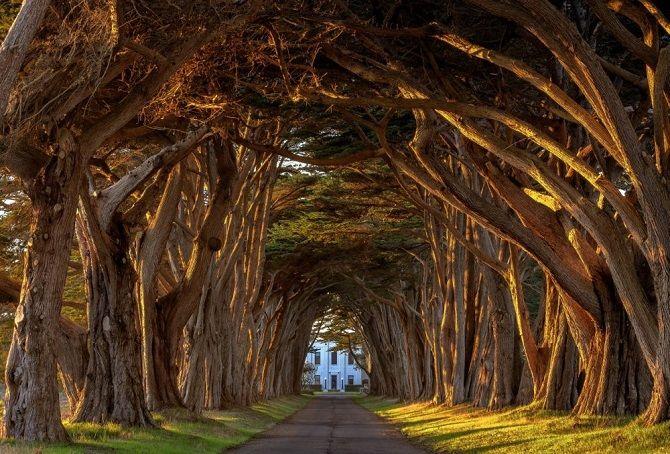 Тунель з кипарисів, США