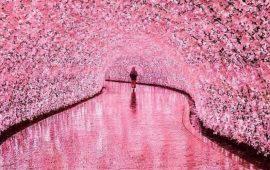 Самые красивые природные тоннели мира, побывав в которых, вы поверите в сказку