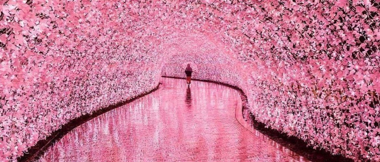 Найкрасивіші природні тунелі світу, побувавши в яких, ви повірите в казку