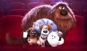 «Тайная жизнь домашних животных 2»: краткий обзор мультфильма, интересные факты