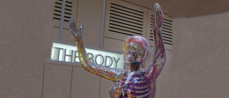 Цікаві факти про наше тіло, які вас здивують