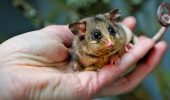 17 милих фото дитинчат тварин, які вміщаються на долоні