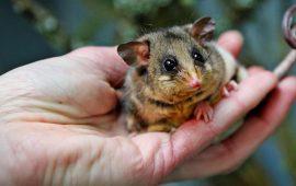 17 милых фото детенышей животных, которые помещаются на ладони