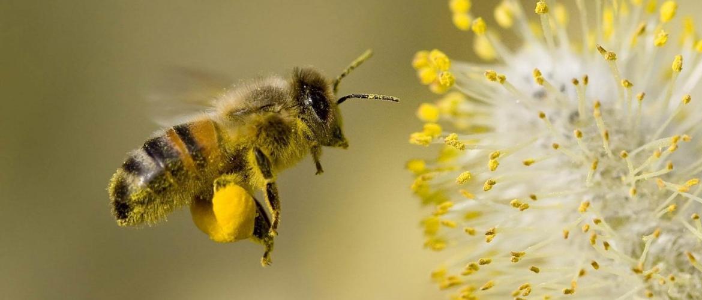 Дикі бджоли почали будувати гнізда з пластикових відходів
