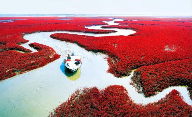 Червоні береги річки Ляохе, Китай