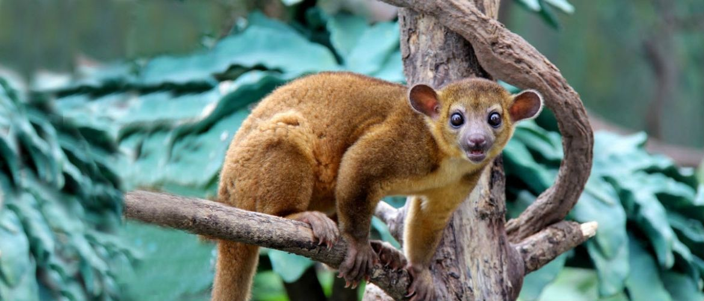 7 экзотических животных, которых можно содержать в домашних условиях