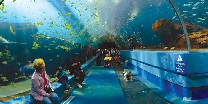 Зоопарк Чианг-Май