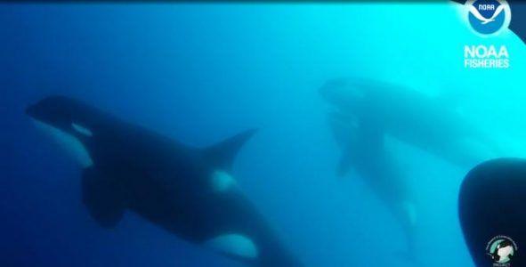 Синий кит группы D