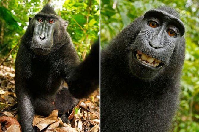 наруто обезьяна