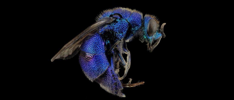 Несучі смерть: 5 найнебезпечніших комах на світлі