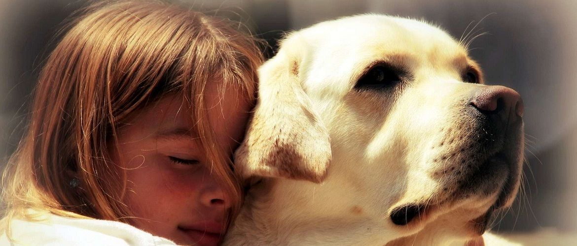 Love, devotion and protection from the most affectionate dogs in the world