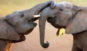 Слоны-эмпаты, пингвины-романтики и рыбы, меняющие пол — факты о животных, которые вы не знали