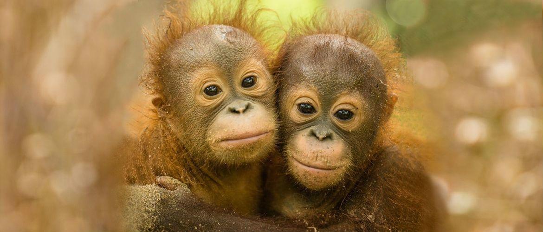 Невероятные факты про обезьян, которые доказывают теорию Дарвина