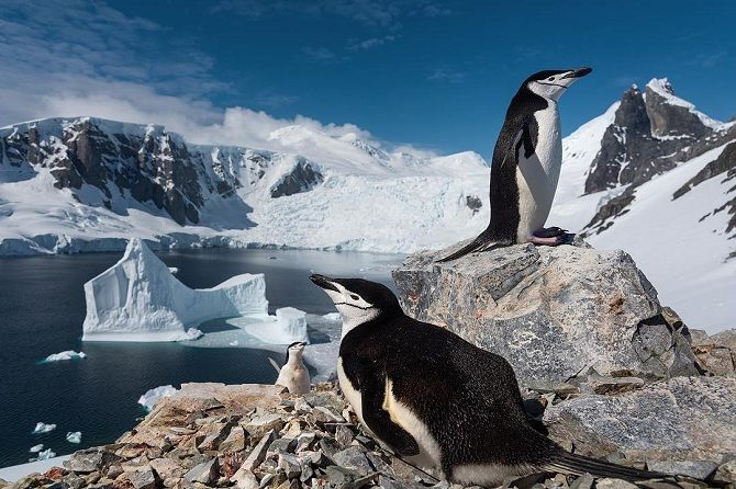 Піднімач пінгвінів