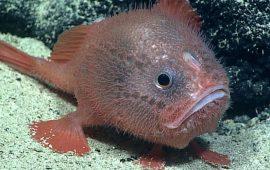 риба труна