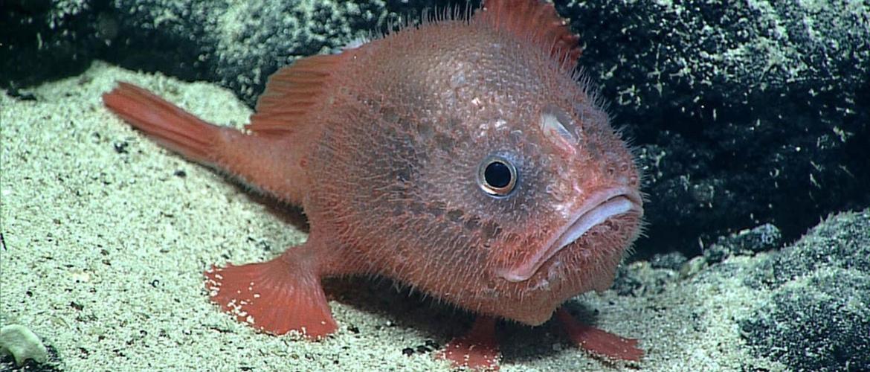 Нові види тварин, які були відкриті в XXI столітті