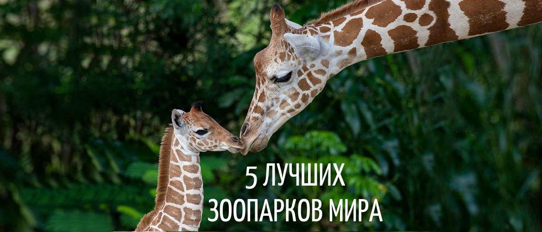 Топ лучших зоопарков в мире