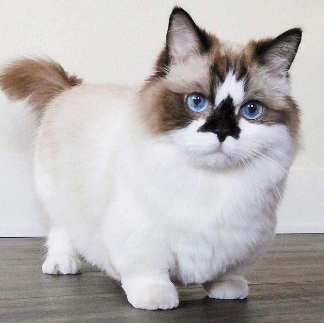 кот Альберт