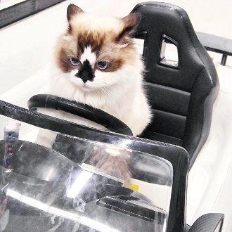 Топ котів-блогерів: вусаті, багаті і знамениті 5