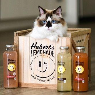 Топ котів-блогерів: вусаті, багаті і знамениті 6