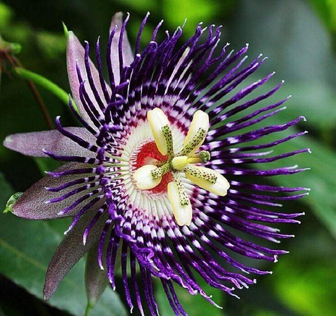 Самые красивые и необычные цветы мира: такого вы ещё не видели 1