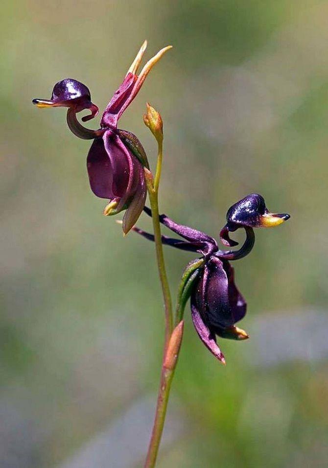 Самые красивые и необычные цветы мира: такого вы ещё не видели 7