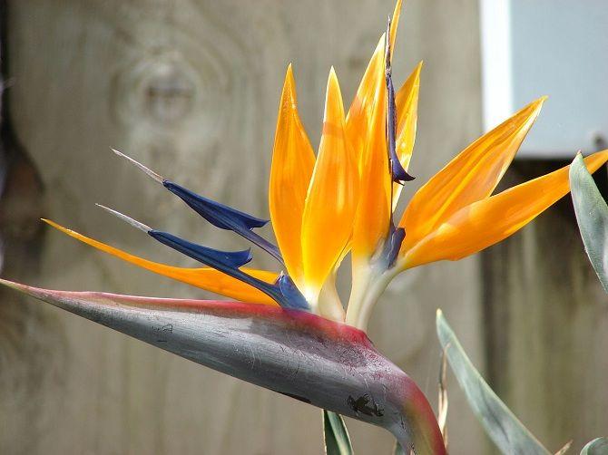 Самые красивые и необычные цветы мира: такого вы ещё не видели 16