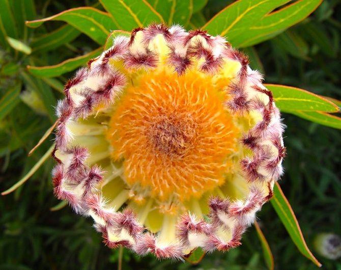 Самые красивые и необычные цветы мира: такого вы ещё не видели 21