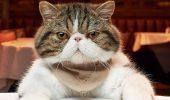 20+ котів, які поводяться, як люди