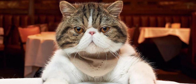 20+ котов, которые ведут себя, как люди