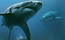 «Синяя бездна 2»: продолжение хоррора об ужасных морских хищниках — акулах