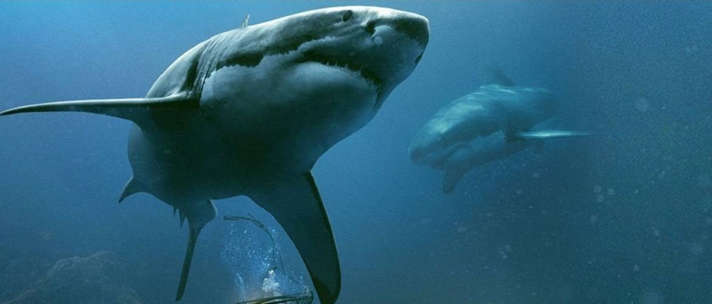 «Синя безодня 2»: продовження хоррора про жахливих морських хижаків – акул